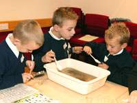 students investigating pond water
